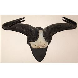 Wildebeest Horns Mount