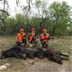 3 Day Hog Hunt in Texas. Unlimited hogs for 2 hunters on the Independence Ranch, 75 miles east of Sa