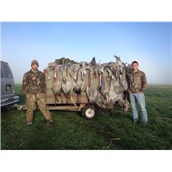 3 Day West Texas Sandhill Crane hunt for 2 hunters in Amarillo, Texas. Wild pheasant can be added fo