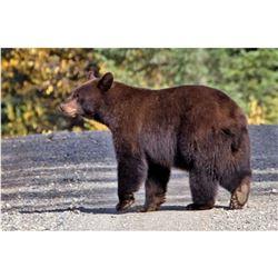 Commission's Tag for Bear                                    * YEAR LONG ARIZONA BEAR TAG  * GOOD ST