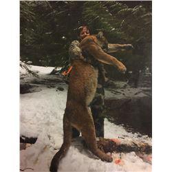 6 Day Mountain Lion Hunt in Idaho