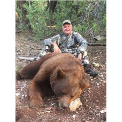 5 Day Arizona Bear Hunt for 1 hunter