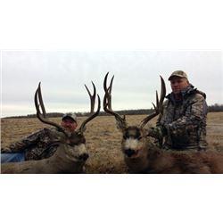 TROPHY MULE DEER HUNT IN CENTRAL ALBERTA