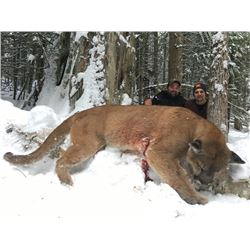 7 Day Hunt for Mt. Lion and Bobcat in British Columbia