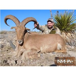 Aoudad Hunt for 2 hunters in New Mexico