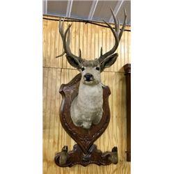 Deer Shoulder Mount On Quarter Sawn Oak Plaque