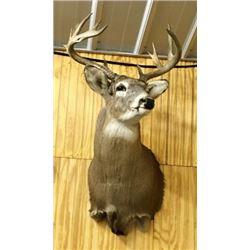 Deer Non Typical Shoulder Moun