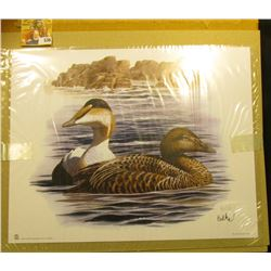 "2006 Fleetwood Print measuring 10.5"" x 13.25"" of a Pair of Sea Ducks personally autographed by the a"
