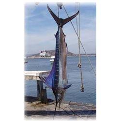 4 Day Fish Slamming Safari from Lad Shunneson & Ken Wilson Adventures for 1 Angler in Zihuatanejo, M