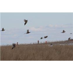Two Day/Two Night South Dakota Pheasant Hunt