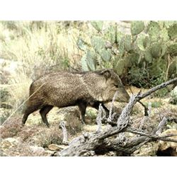 Javelina Hunt in Southeast Arizona with Purple Heart Veterans