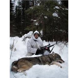 Ontario Canada Winter Wolf Hunt