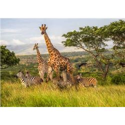 ZULU NYALA GAME LODGE - Is once again donating a luxury 6 day / 6 night photo safari for two people