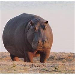 Kerneels Viljcen of Monkane Safaris is offering a 7 day hunt in South Africa for one hunter for 1 hi