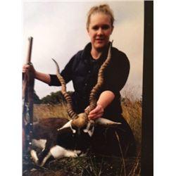 HeadHunters Hi C Ranch Texas, Trophy Blackbuck hunt Safari Style 3 days 2 nights