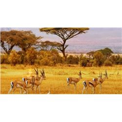 African 10 day hunt for 4 hunters INCLUDES 11 ANIMALS
