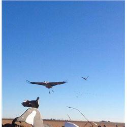 Sandhill Crane hunt with Final Descent in Texas