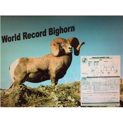 Print of World Record Bighorn