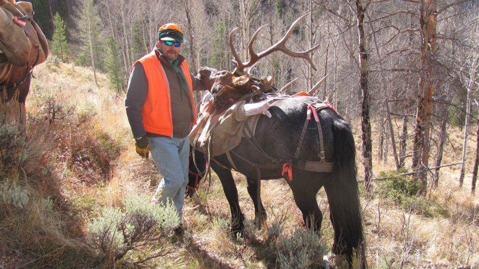 Discounted 2 Hunters Auction price each Colorado Guided elk