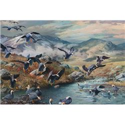 Adamson, Harry Curieux - Emperor Geese Coming To Preen