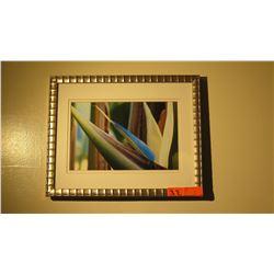 "Framed Print: Bird of Paradise, 13"" x 15"""