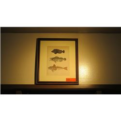 "Framed Print: Fish 17"" x 15"""