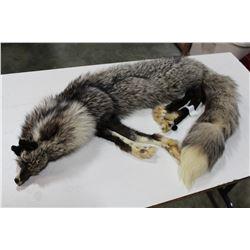 SILVER FOX PELT