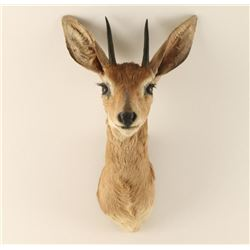 DIK-DIK Shoulder mount