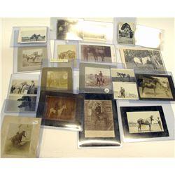 US Horse Portrait Collection (19)