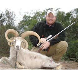 7-day Argentina Ram and Boar Hunt for 2 Hunters