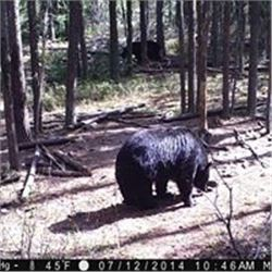 Trophy Black Bear Hunt in Saskatchewan