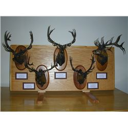 Artists Proof #1 RMEF Record Bronze Elk Heads