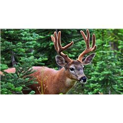 Washington State Governor's Blacktail Deer Tag