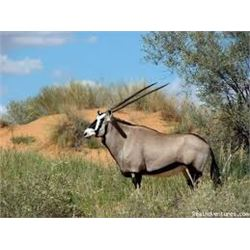 African Hunting Safari with Kalahari Safari -Prestige Trophy Hunting Lodge and Spa in the Kalahari o