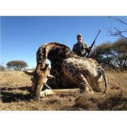 7 Day Giraffe Hunt for 2 Hunters with Monkane Safaris