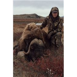 3 Day Musk Ox for 1 in Greenland