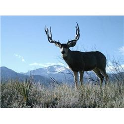 Discounted Private Land Mule Deer Hunt for 2018/2019