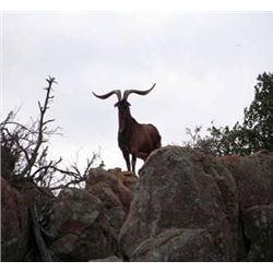 Discounted Hunt Exotics In Colorados Mountains, while in Colorado see Elk the Colorado Sites