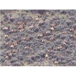 Discounted Great Horseback Cow Elk Hunt in Wyoming, 4000 elk in the area is not uncommon