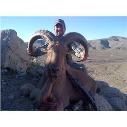 Discounted California Hunts for Tule Elk, Hogs, Blacktail, Varmit, Birds, Auction Aoudad Ram