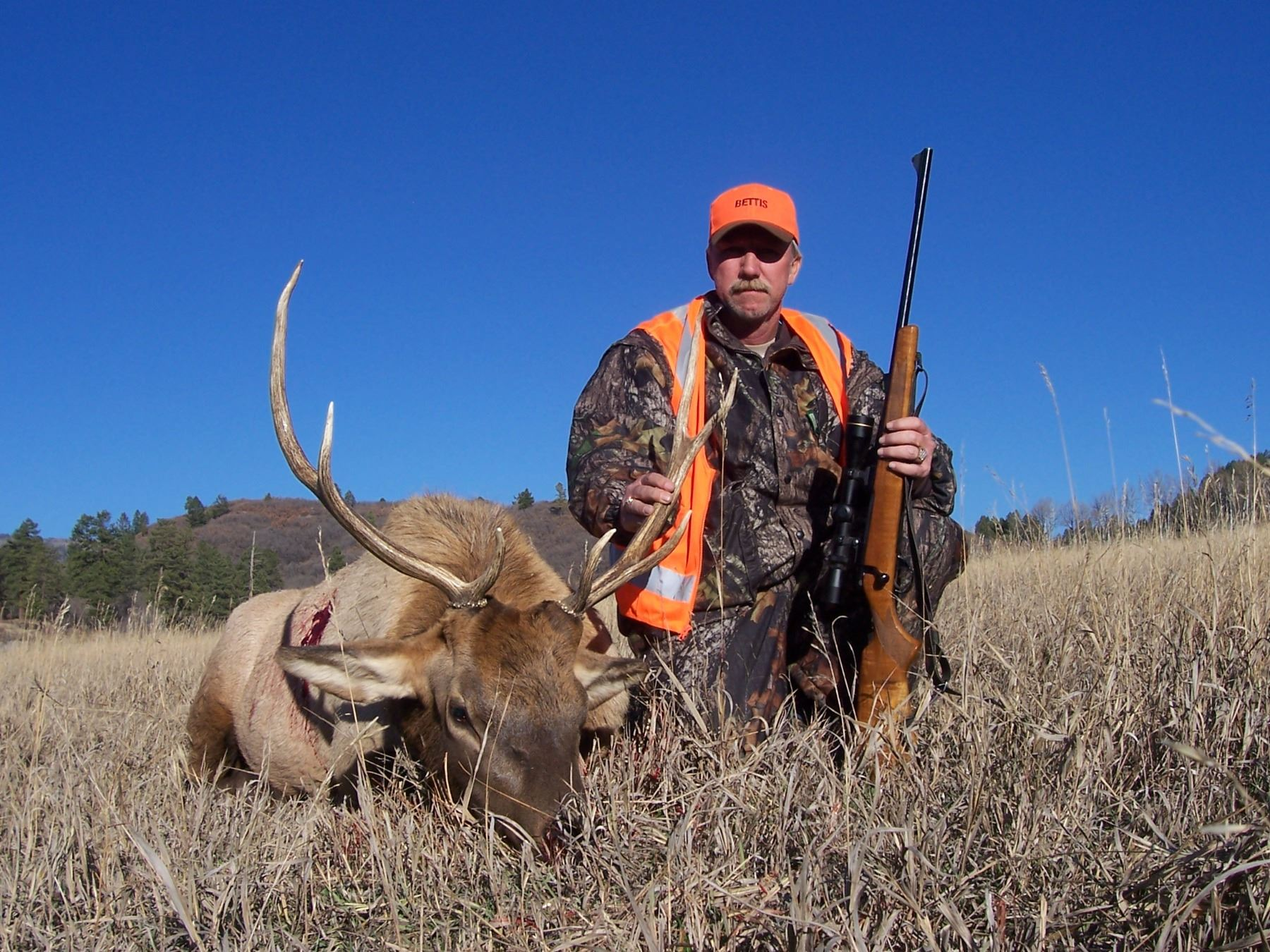 Discounted Colorado Elk Hunt Lodging with the option for Hunting
