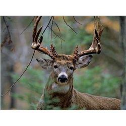 Discounted Bird and Beast Hunt Semi-Guided Whitetail Deer and Pheasant in Eastern Nebraska