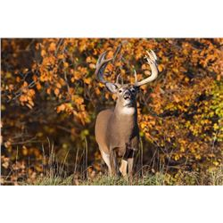 I have a secret place in Iowa with big whitetail and it doesn't take any point to draw the license!