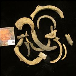 Group of Pre-Columbian Tusks, carved Shell, and possibly Bone Fragments.
