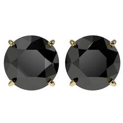 4 CTW Fancy Black VS Diamond Solitaire Stud Earrings 10K Yellow Gold - REF-79A9X - 33136