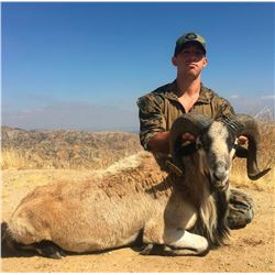 Youth Hunt for Exotic Goat-Sheep with Taxidermy Shoulder Mount and Savage .243 Firearm