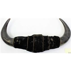 Victorian period mounted buffalo horn
