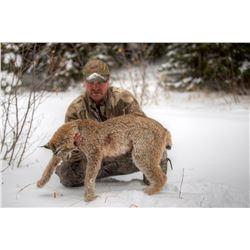 5-Day British Columbia Bobcat Hunt