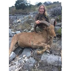 2-Day Texas Aoudad Hunt with Trash Rack Ranch