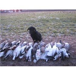 1-Day Chesapeake Duck & Goose Hunt for 4 Hunters